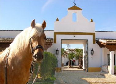 Equestrian Escapes Feature on Horse Smart 20 Of The Best Horse Blogs