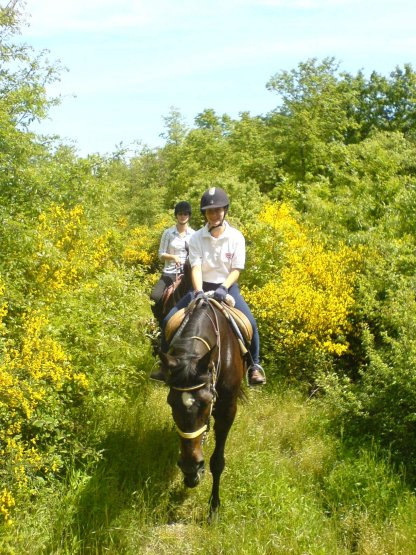 Autumn Riding Holiday Offer