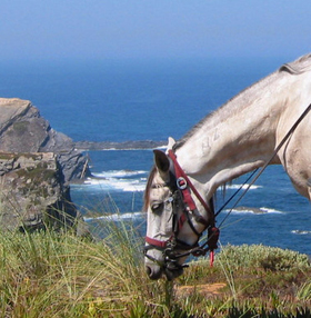 Equestrian Escapes Special Offer