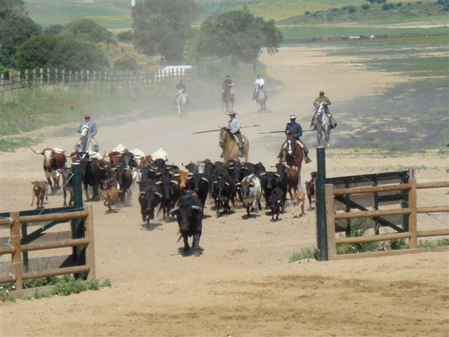 Ranch riding in Andalucia