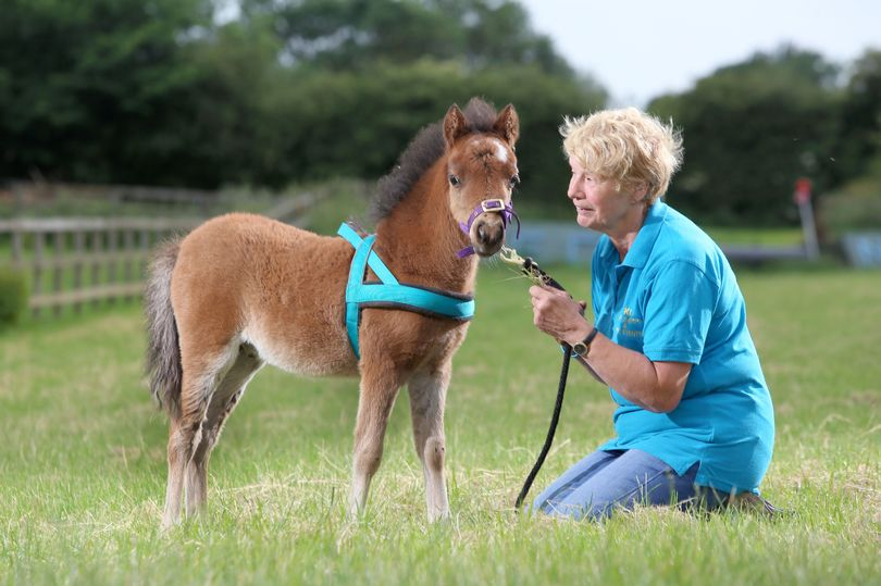 First-ever guide horse trained to help blind journalist