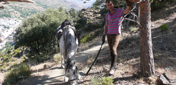 Alpujarra Short Trail Riding Break