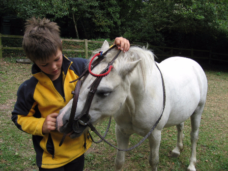 Putting on bridle