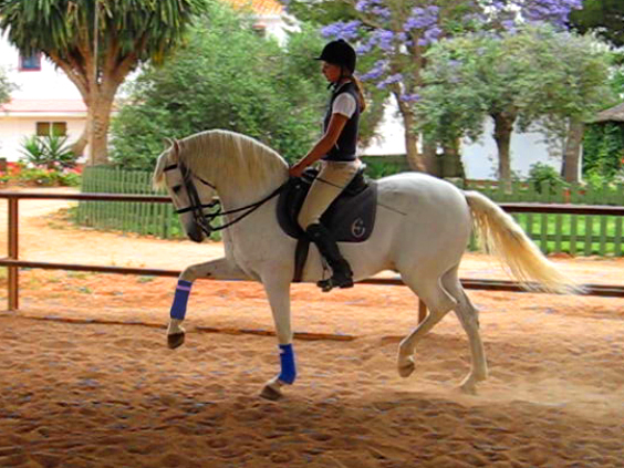Epona trail riding and training Spain