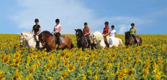 Horses, Sun and Wine from £795 pp