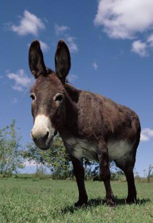 D is for Donkey