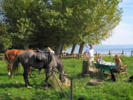 Horses and picnic