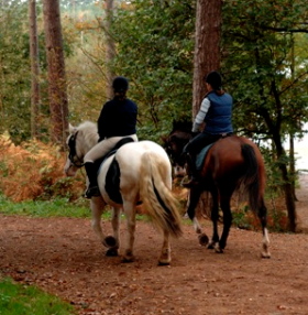 Equestrian Escapes hits the headlines