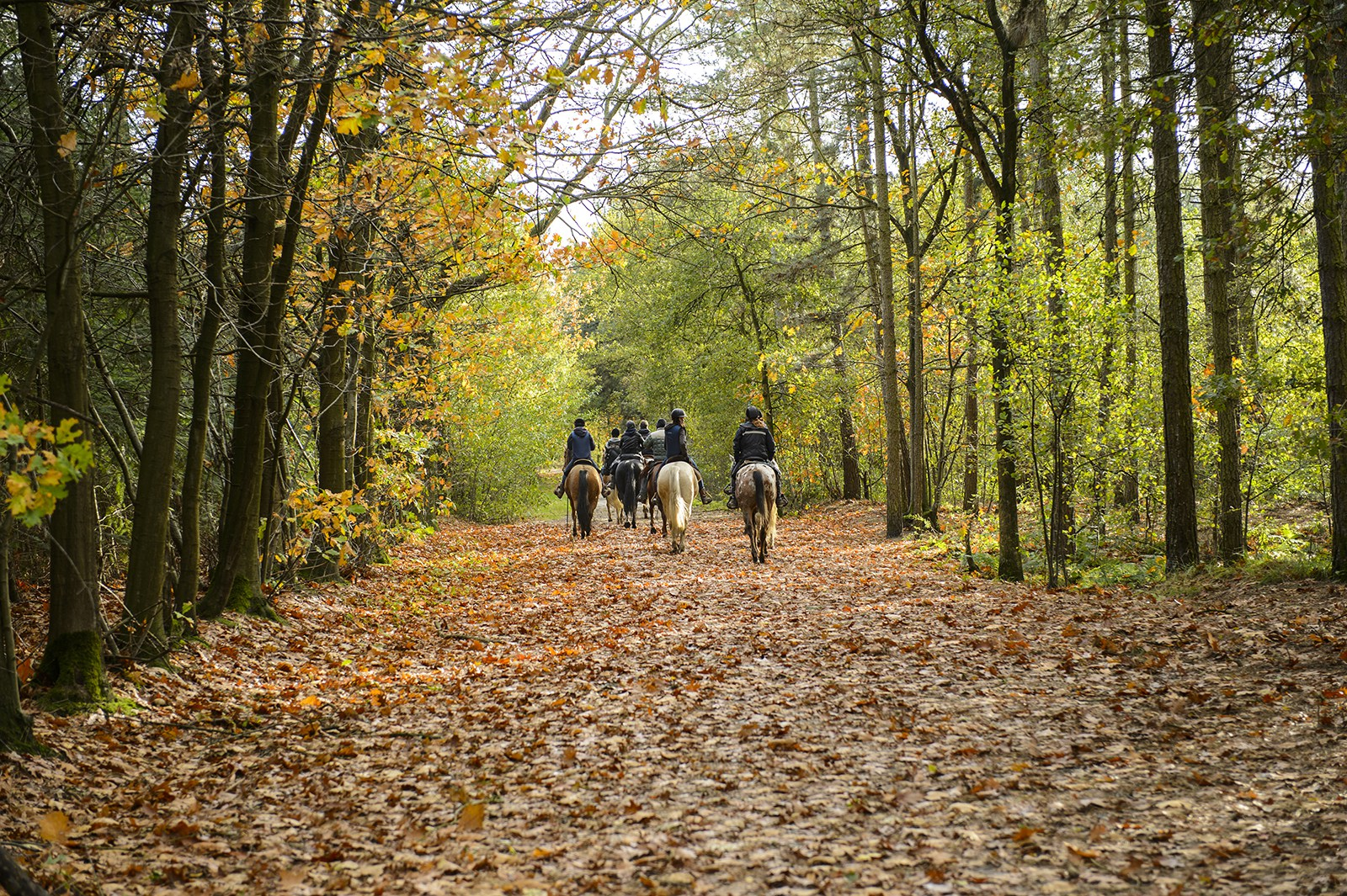 Ride in the Surrey Hills from £450pp