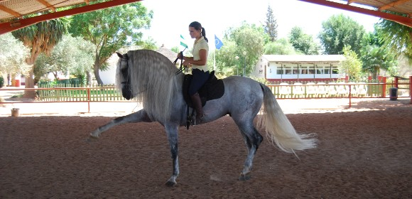 Classical Dressage in Seville from £1395pp