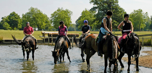 Equestrian Training