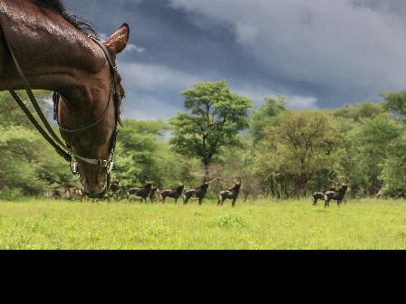 Ride Zimbabwe Matopos Safari