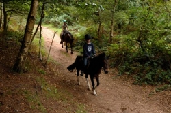 Forest riding UK