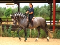 Dressage Riding Holidays