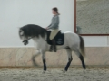 Dressage Holidays in Portugal