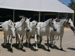 Horse Riding Holiday Andalucias