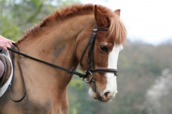 Dressage Riding Holiday Berkshire