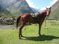 Horse Riding Holidays Peru