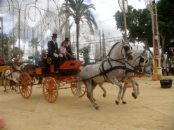 Horse and carriage in the Feria