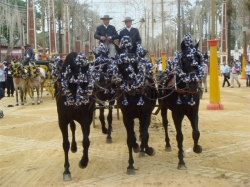Horses dressed up for Feria